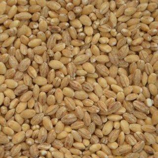 Gerste 25 kg (gereinigt, entspelzt, speisebereit)